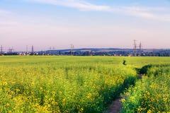 Green grass. Under blue sky Stock Image