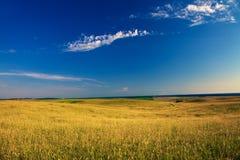 Green grass. Under blue sky Royalty Free Stock Photos