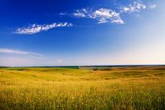 Green grass. Under blue sky Royalty Free Stock Photo