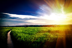 Green grass. Under blue sky Royalty Free Stock Images