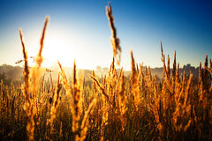 Green grass. Under blue sky Royalty Free Stock Photography