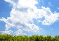 Green grass under blue sky Stock Photography