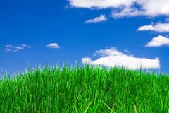 Green grass under blue sky Royalty Free Stock Photos