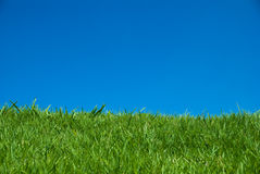 Green grass under the blue sky Stock Photos