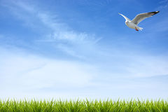 Green grass under blue sky and bird Royalty Free Stock Photography