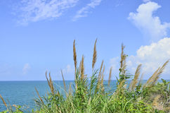 Green grass under blue sky. With the sea Stock Photo