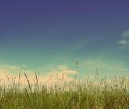 Green Grass Under Blue Sky - Vintage Retro Style Stock Photo