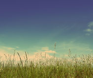 Green grass under blue sky - vintage retro style Stock Photo