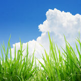 Green grass under blue sky Royalty Free Stock Images
