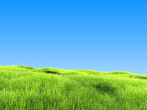 Green Grass Under Clear Blue Sky. On Sunny Day Stock Images