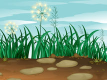 Green grass under the clear blue sky. Illustration of the green grass under the clear blue sky Royalty Free Stock Photos
