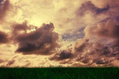 Green grass under cloudy sky Stock Photo