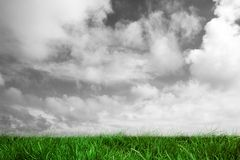 Green grass under grey sky Royalty Free Stock Photography