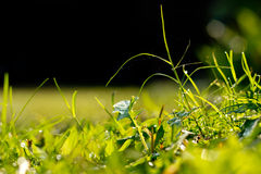 Green grass. Royalty Free Stock Photo