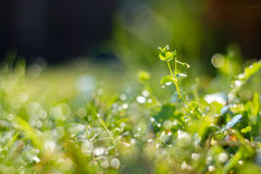 Green grass. Stock Photo