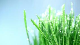 Green grass under rain stock video