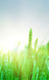 Green grass under the rain Royalty Free Stock Photos