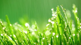 Green grass under the rain stock footage