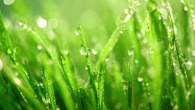 Green grass under the rain Royalty Free Stock Images