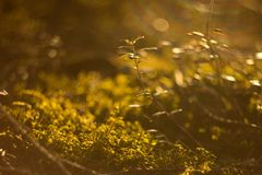 Green grass under rays of sun Royalty Free Stock Images