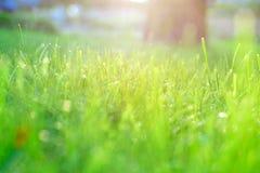 Green grass under rays of sun Stock Image