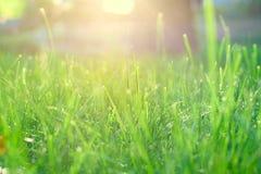 Green grass under rays of sun. Closeup, shallow DOF Royalty Free Stock Photo