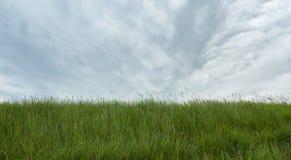 Green grass under sky Stock Image