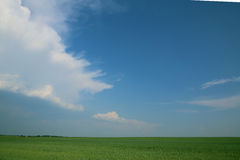 Green grass. Under the sky spacious field Stock Images