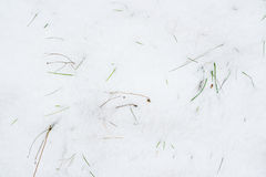 Green grass from under snow. Royalty Free Stock Photo