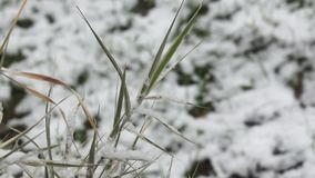 Green grass under snowfall stock video footage