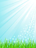 Green grass under sunrays Royalty Free Stock Image