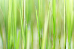 Green grass unfocused background Royalty Free Stock Photos