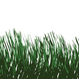 Green Grass Vector. Green grass isolated over white - this tiles seamlessly as a pattern in any direction Royalty Free Stock Photos