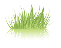 Green grass vector Royalty Free Stock Photography