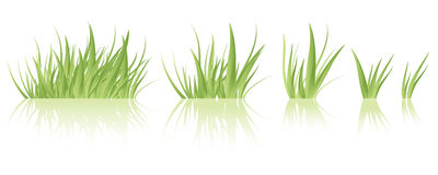 Green grass vector. Vector green grass tufts, different sizes, isolated Royalty Free Stock Photo