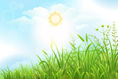 Green grass vector background. With sun and sky Stock Images