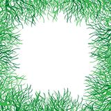 Green grass vector frame Stock Photos