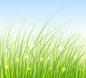 Green Grass Vector Illustration Stock Images