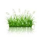 Green grass, vector Royalty Free Stock Image