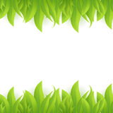 Green grass, vector Royalty Free Stock Photos