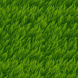 Green grass vector seamless texture Stock Photos