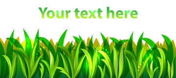 Green grass, vector. Green grass on white background, vector Royalty Free Stock Photos