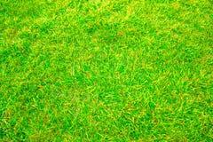 Green grass. Very green grass beautiful background Royalty Free Stock Photos