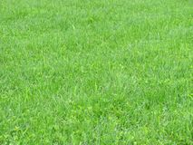 Green grass. View on green grass background Royalty Free Stock Image