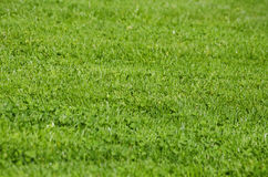Green Grass. Vitality Spring Green Grass Background Stock Image