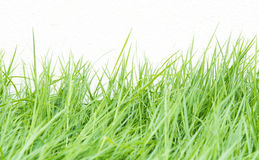 Green grass on wall background Stock Image