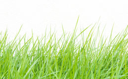 Green grass on wall background Royalty Free Stock Photo