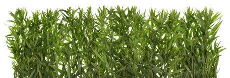 Green grass wall concept Royalty Free Stock Photos