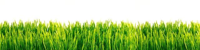 Green grass wallpaper Stock Images