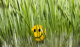Green Grass Wallpaper with smile Royalty Free Stock Image